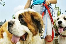 Peace O' Mind Pet Care | Lindsey Barksdale | Flowery Branch GA Georgia | Hall County Ga