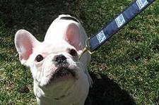 Peace O' Mind Pet Care | Lindsey Barksdale | Gainesville GA Georgia | Hall County Ga